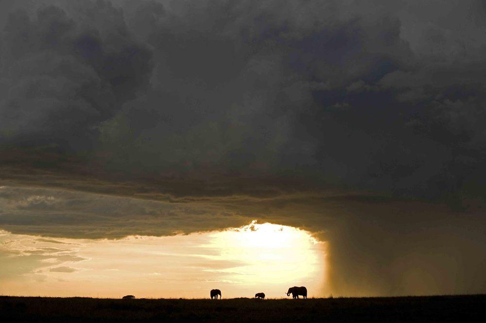 Elephant in Storm Mara.jpg