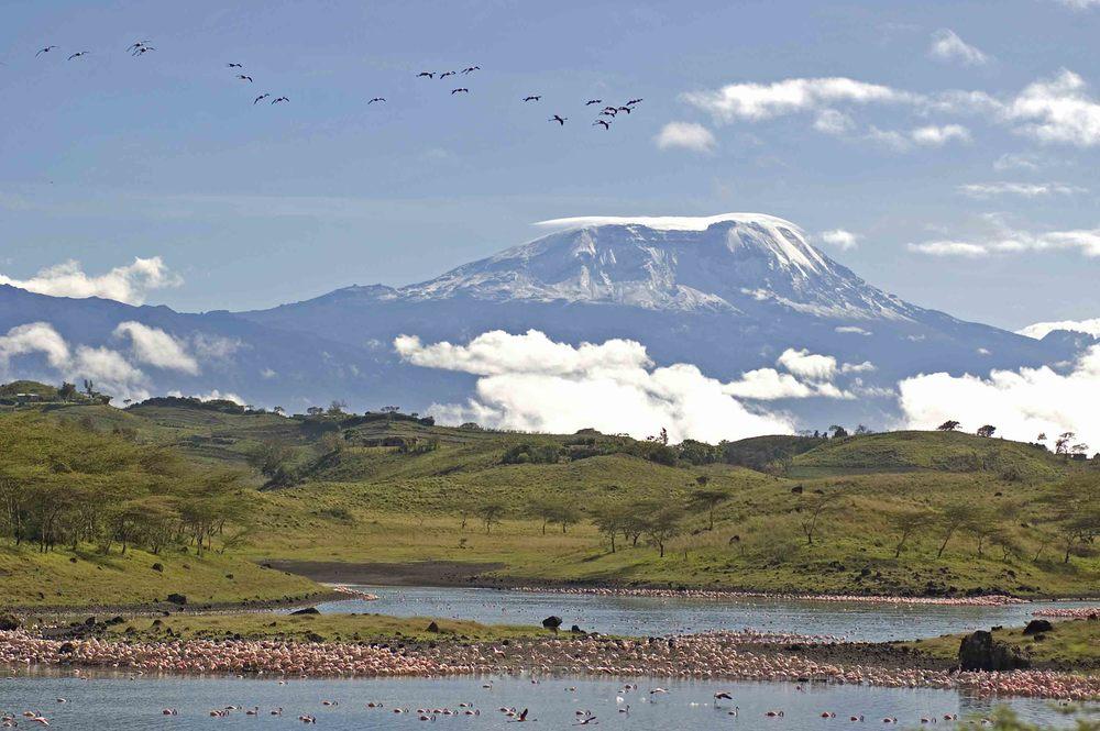 Kilimanjaro Momela lakes Flamingoes.jpg