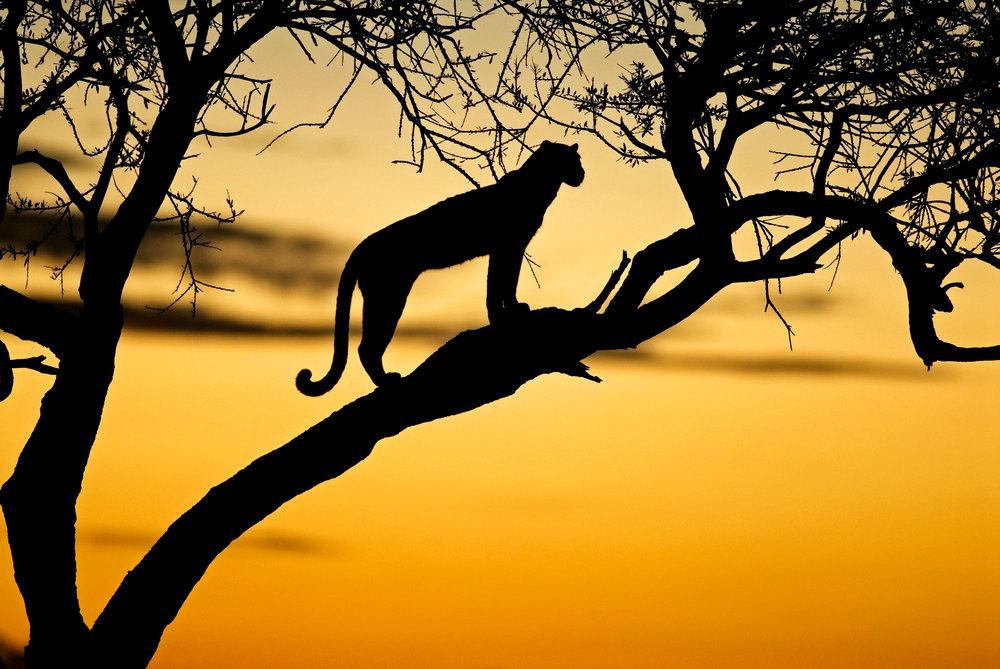 Mbili-Sunset-Masai-Mara-2006.jpg
