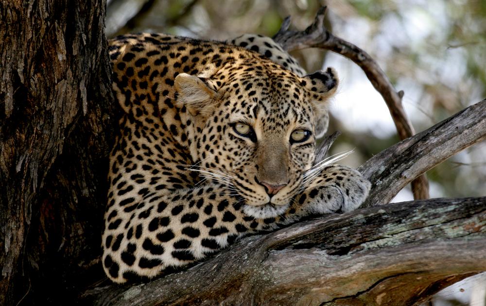 003_Africa-Copyright©ianjohnson2014.jpg