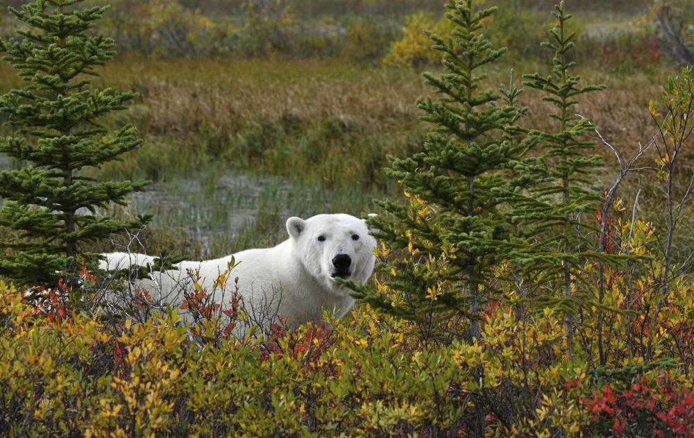 003_Canada-Copyright©ianjohnson2014.jpg