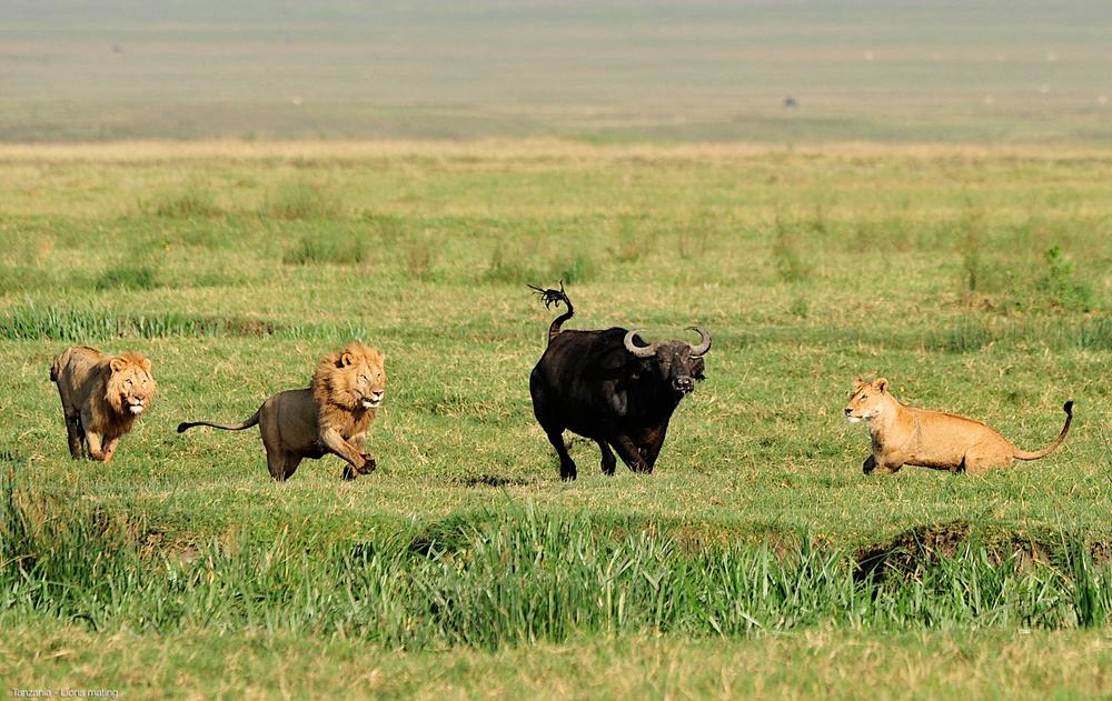 017_Africa-Copyright©ianjohnson2014.jpg