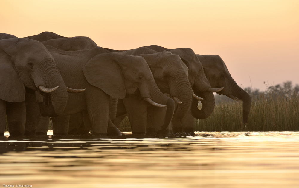 018_Africa-Copyright©ianjohnson2014.jpg