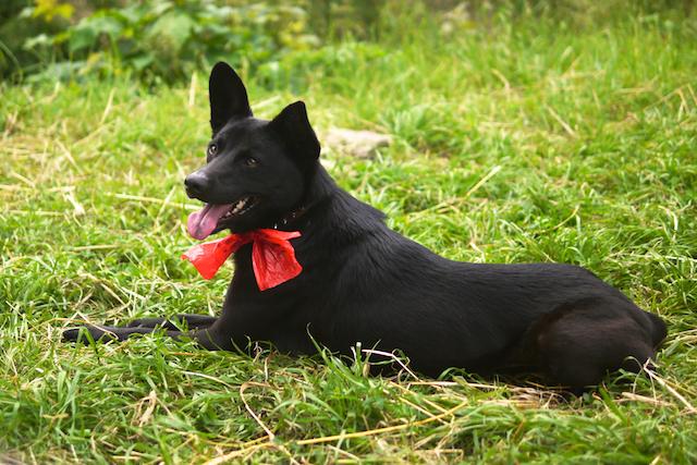 野餐的阿狗帶著塑膠袋做的蝴蝶結