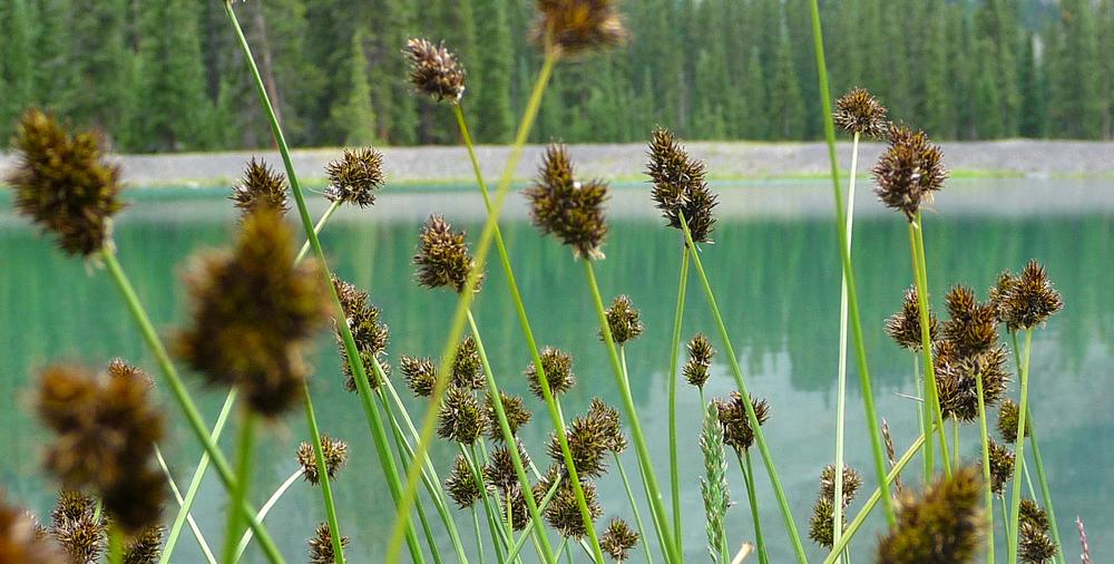 Telluride Miner's Lake.jpg
