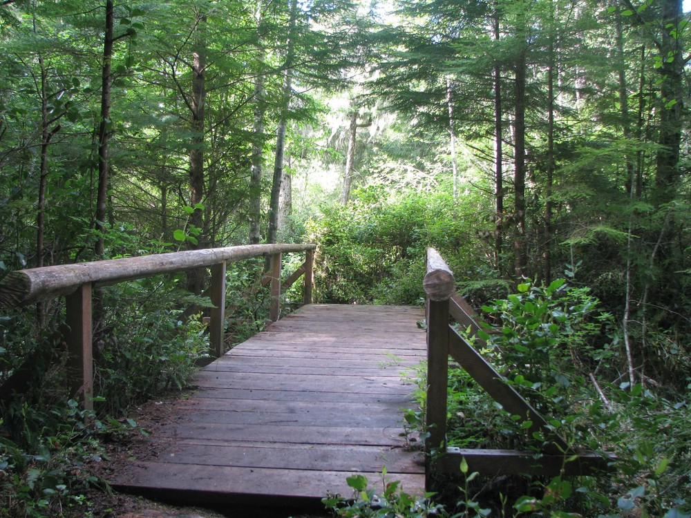 Ecological Park Trail One Bridge