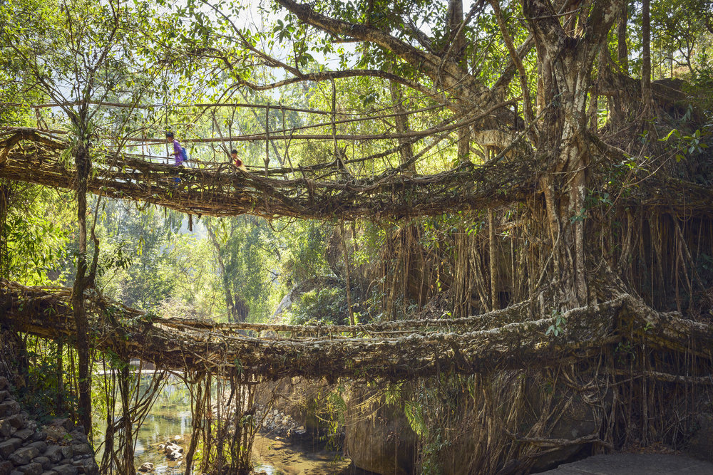 STOKES_02_02_CHEERAPUNJEE_ROOT_BRIDGES_0832.jpg