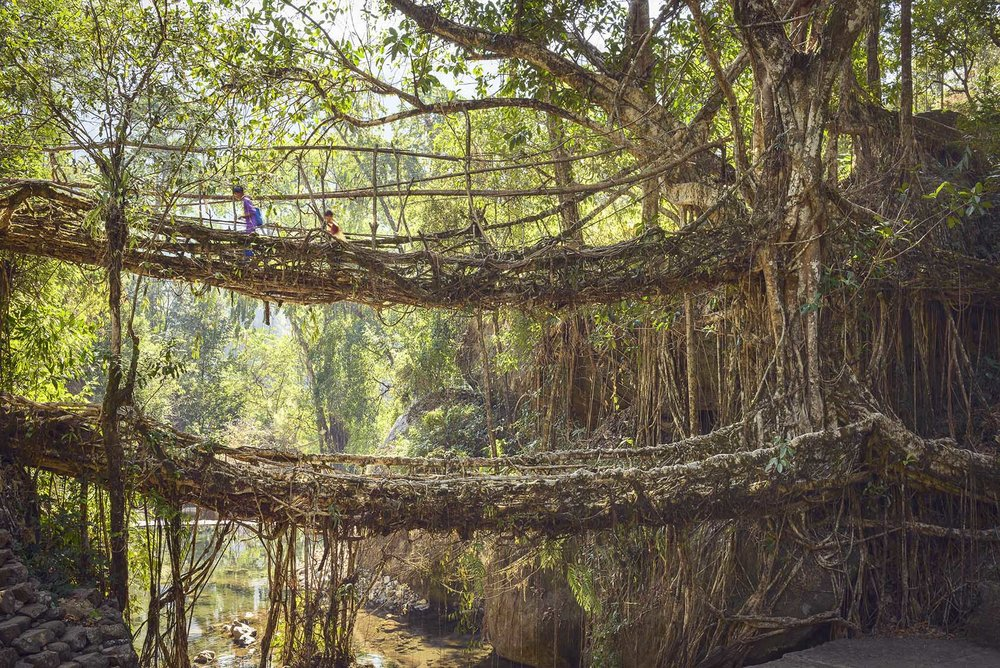 02_STOKES_INDIA_ROOT_BRIDGES_2.JPG