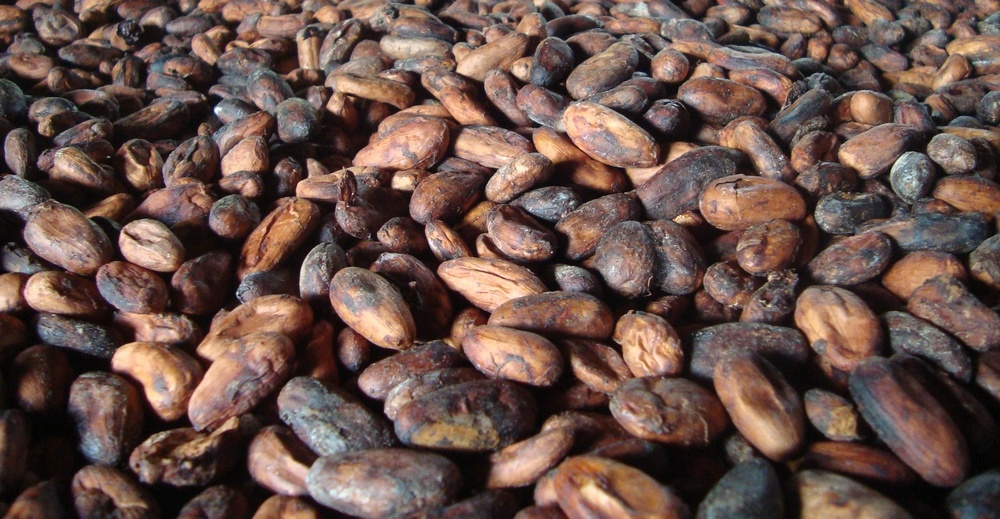 Better cacao sourcing is worth a hill of beans.