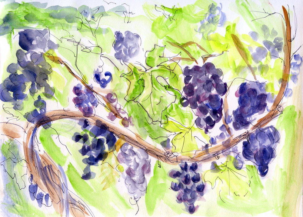 print vineyard.jpg