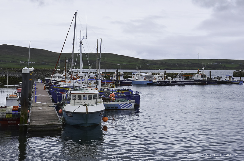Dingle Harbor by Simply Living Photography