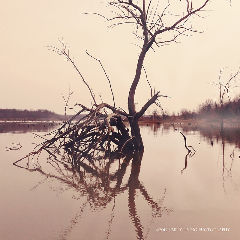 Lonely tree by ©simply living photography featured at Shinephotochallenge