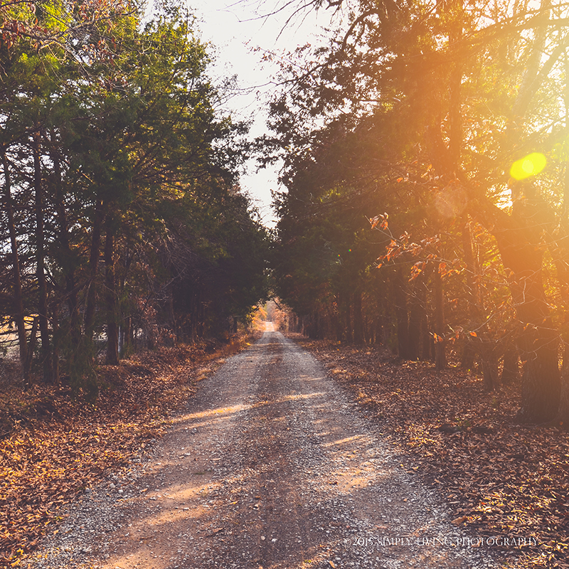 Fall Road by ©simply living photography featured at dhdphotoaday