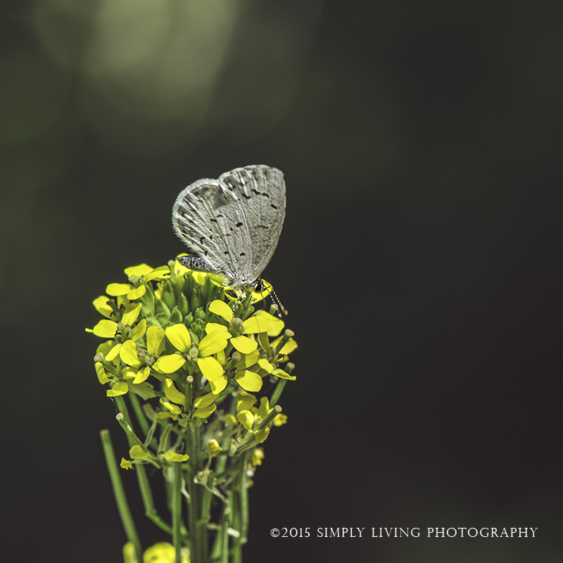 Lightly by Lisa Kerner ©Simply Living Photography