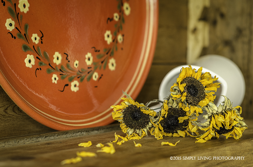 Sunflower IV by Lisa Kerner ©Simply Living Photography