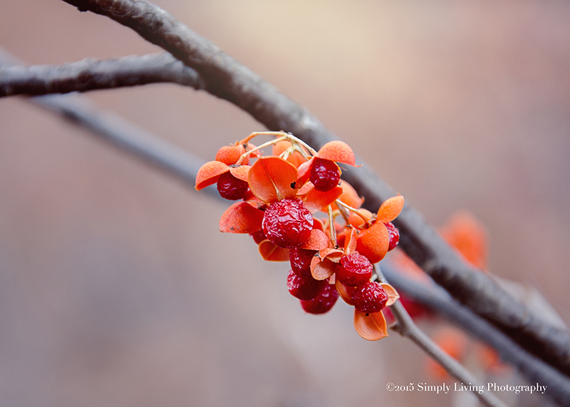 Berry Bloom by Lisa Kerner ©Simply Living Photography