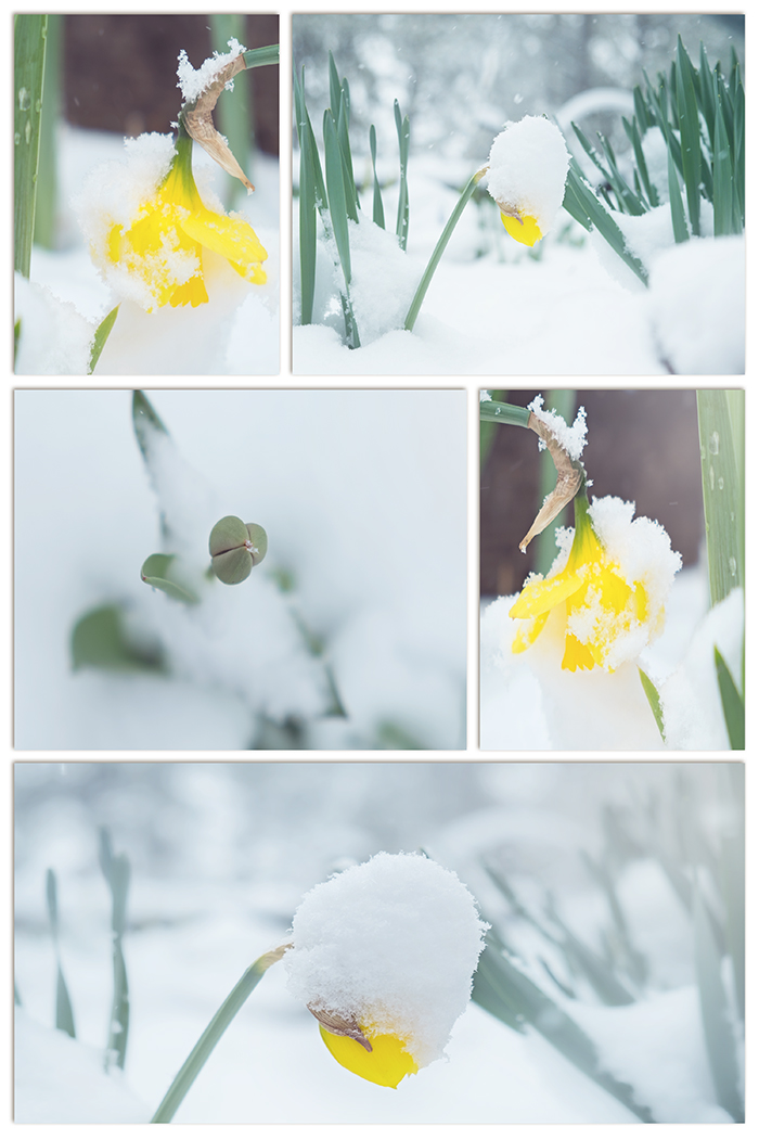 Looking For Color in Spring | Life Thru the Lens | Lisa Kerner | Simply Living Photography