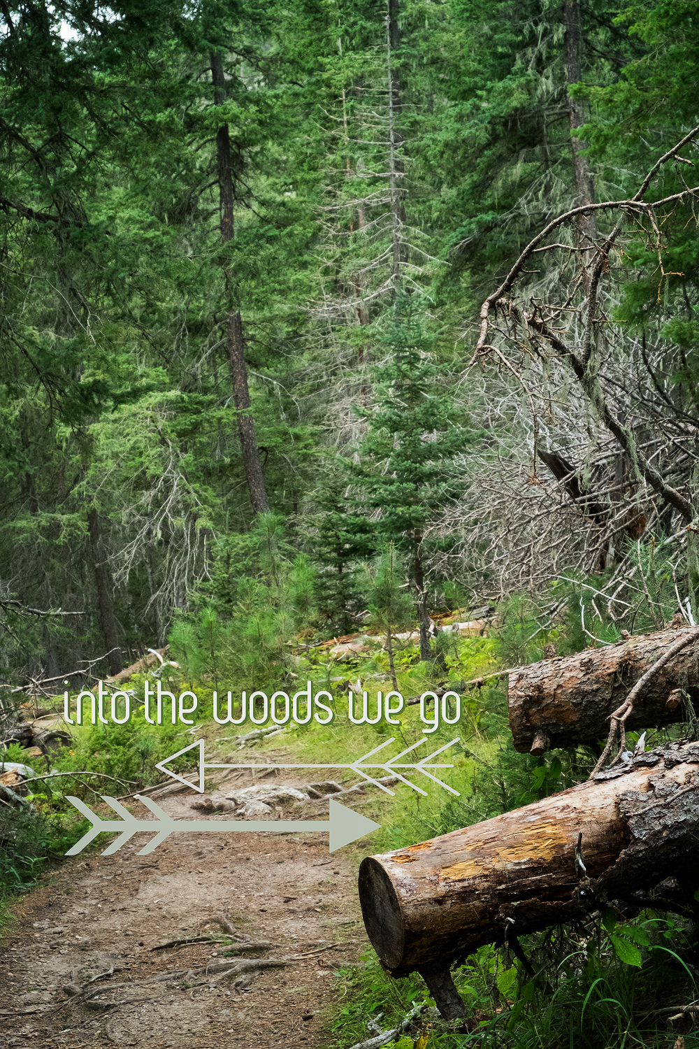 Into the Woods We Go | Life Thru the Lens | Lisa Kerner | Simply Living Photography