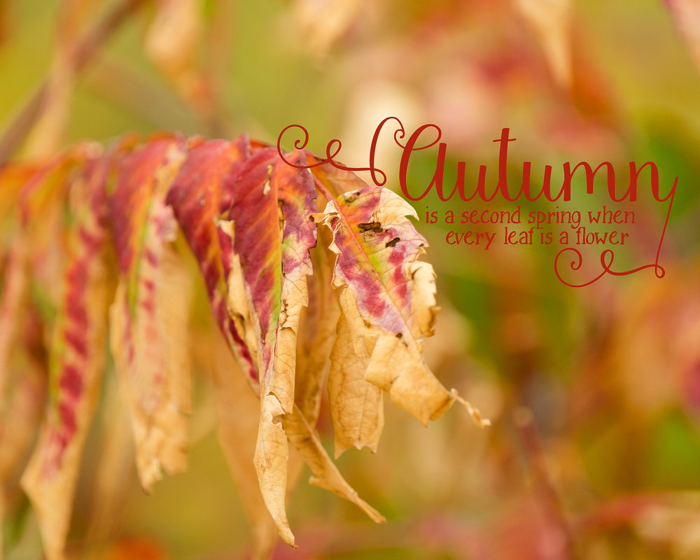 Lisa Kerner | Life Through the Lens Link Up | Colors of Autumn:Gold