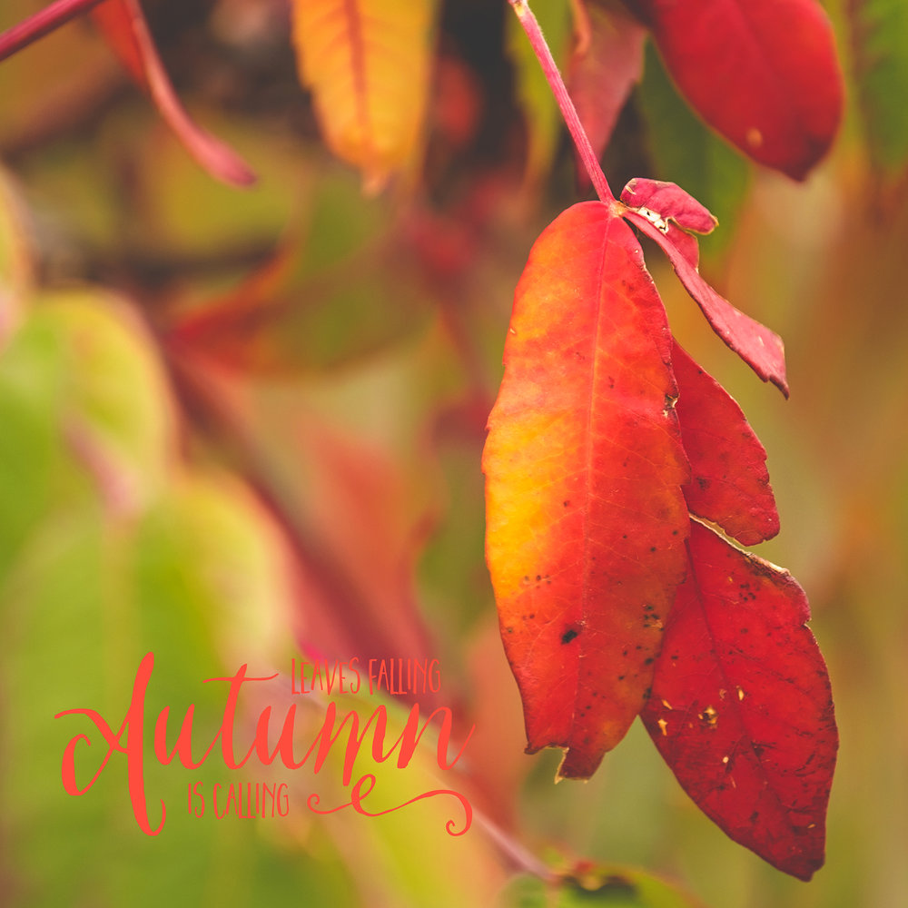 Lisa Kerner | Life Thru the Lens Link Up | A Autumn Photography Challenge