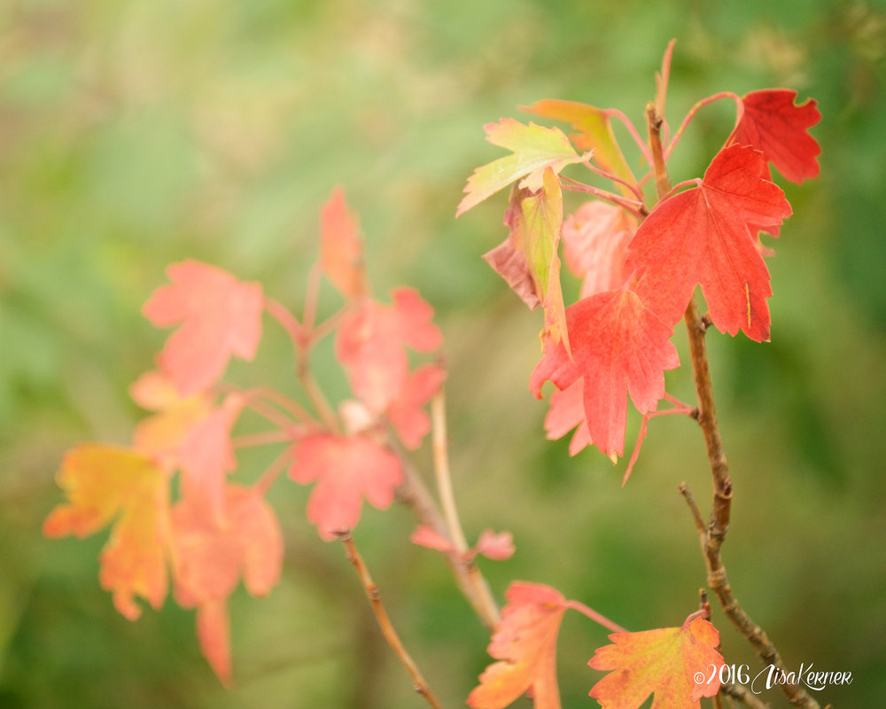 Lisa Kerner | Life Thru the Lens Link Up | Autumn Color Challenge: Orange