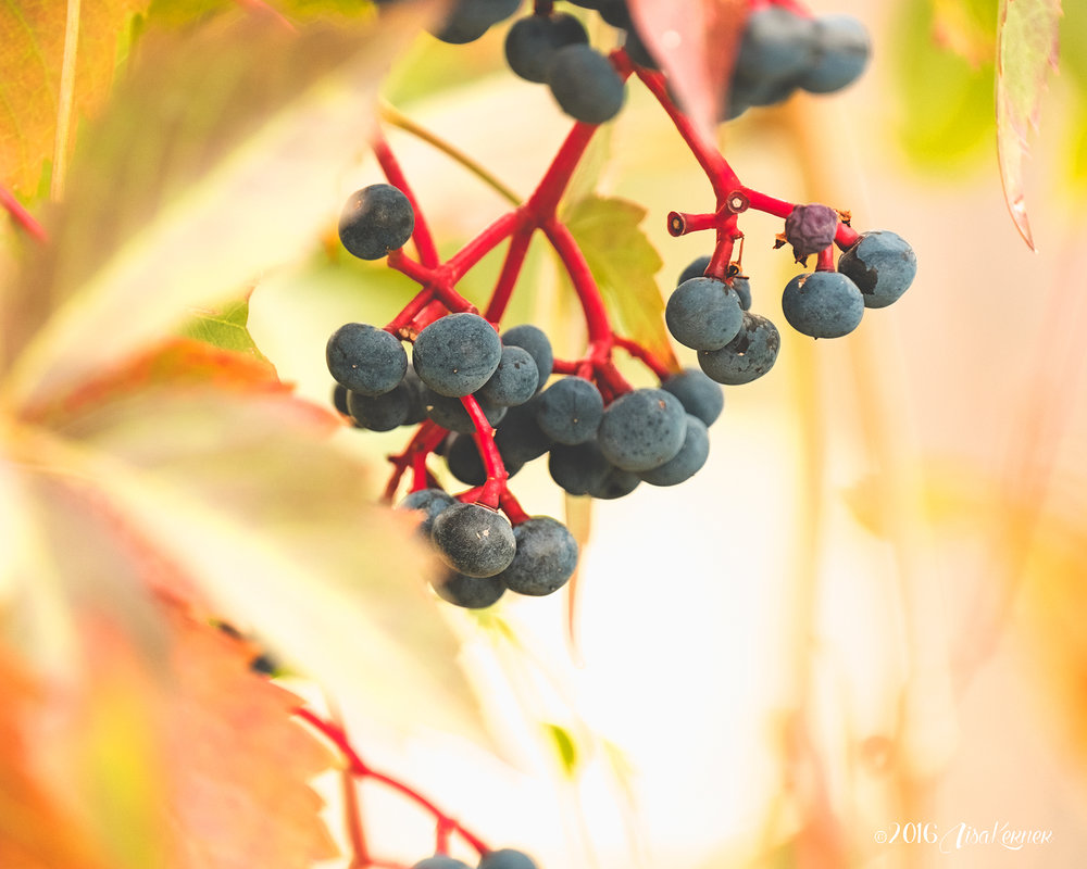 Lisa Kerner | Life Thru the Lens | Colors of Autumn | How to Isolate Fall Colors