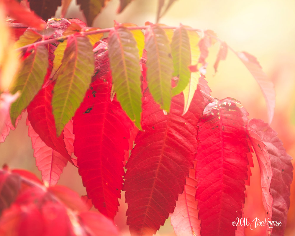 Lisa Kerner | Life Thru the Lens | Simply Living Photography| Colors of Autumn