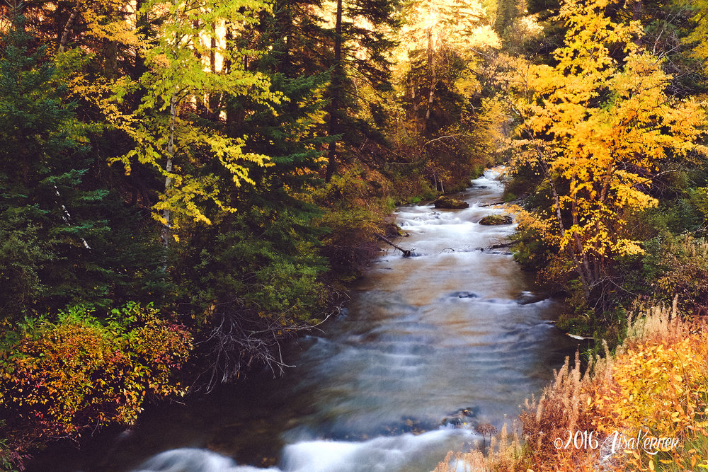 Lisa Kerner | Life Thru the Lens | Colors of Autumn; A Final Farewell