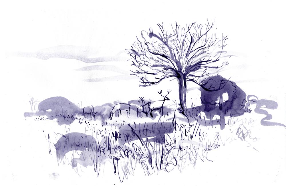 deers sketch