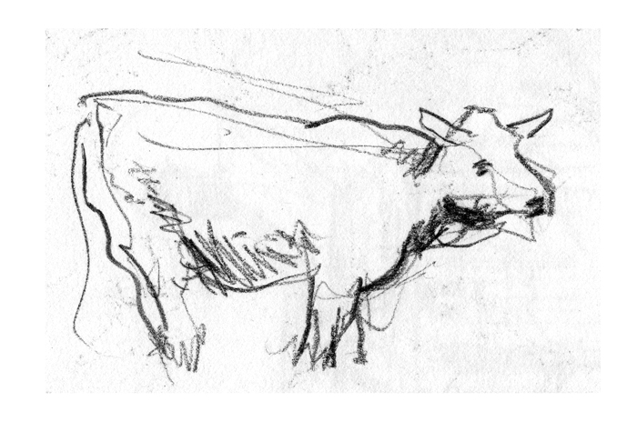 cow_613