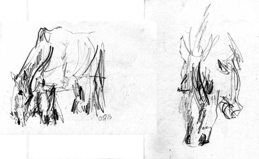 horse_513