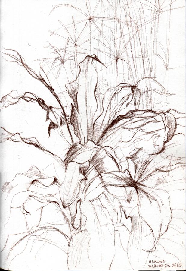 palm_tree_podolsk_613