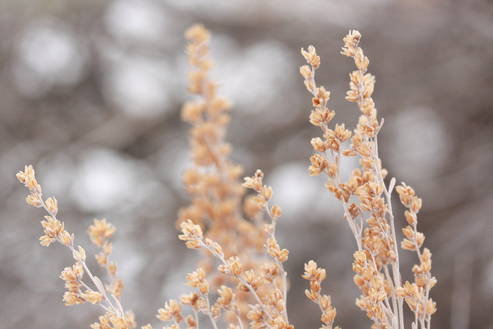 Colorado flora.