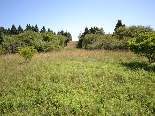 640-Orchard,-Meadow-and-Dri.jpg