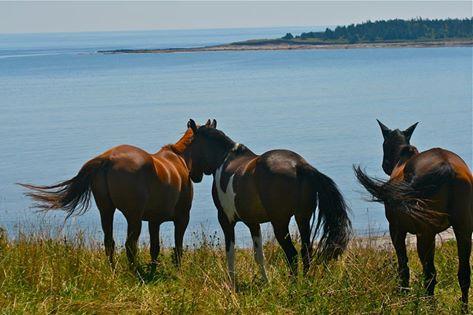 Terry's horses.jpg