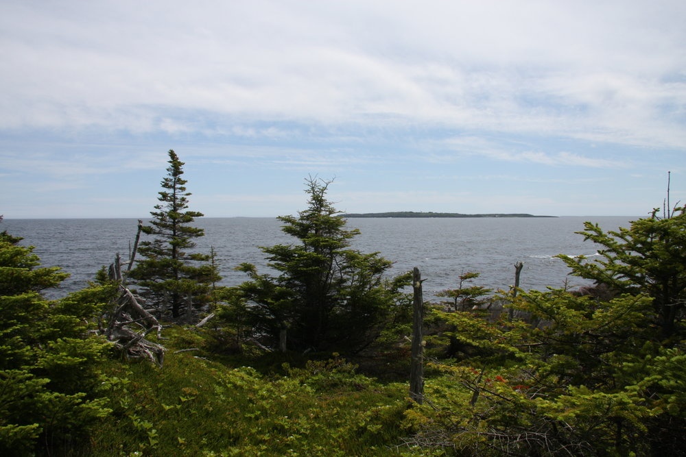 14, Wooded area and distant island.jpg