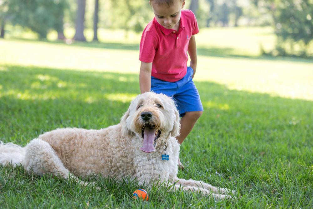 Young boy with his goldendoodle family dog at Loose Park in Kansas City playing fetch with ball