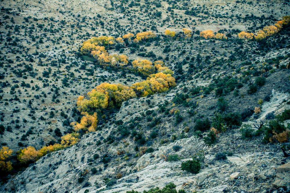 Southern Utah Fall color.
