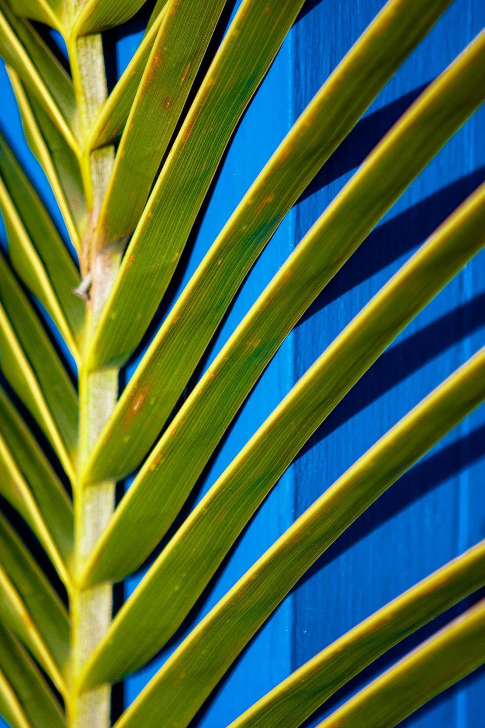 Abstract detail image of green leaves set against a bright blue post.