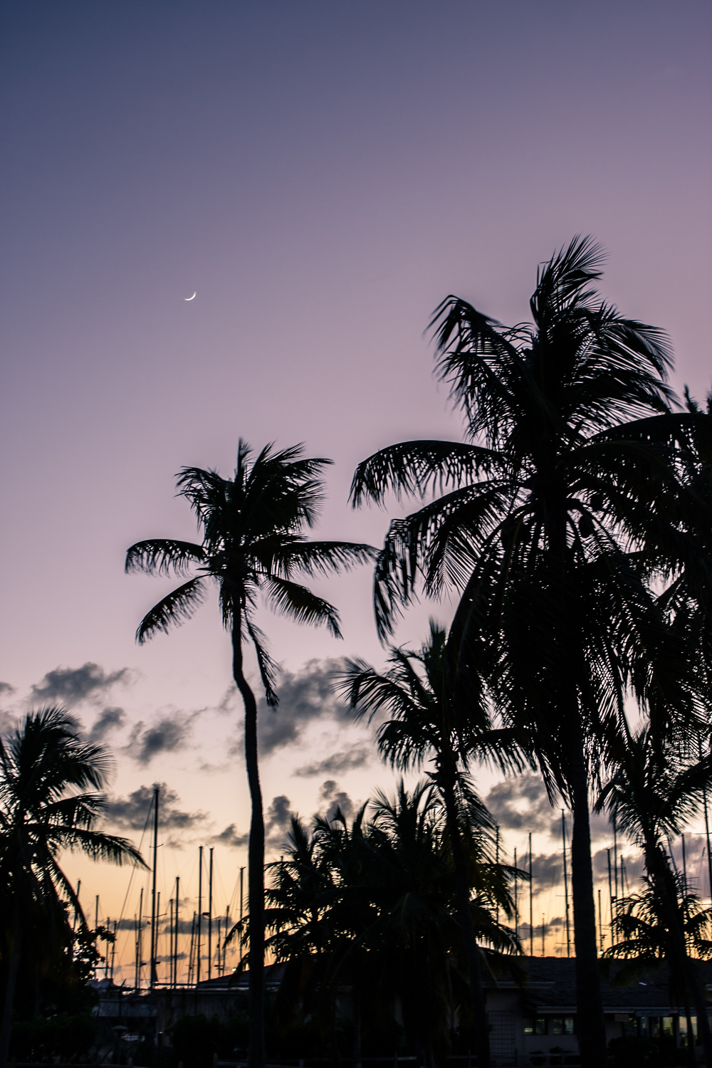 A fingernail moon and palm tree silhouetted against a bright sunset over a harbor of anchored sailboats.