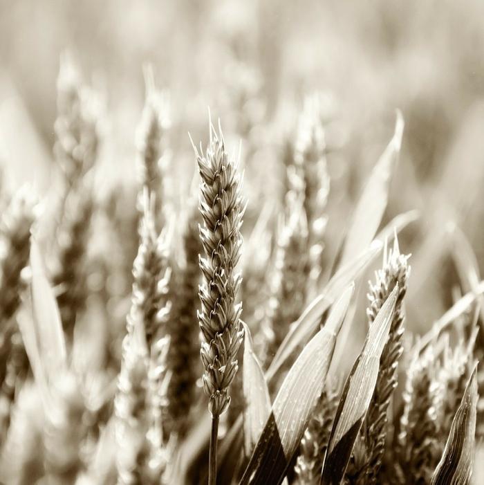 kan fibrer hjälpa vid trög mage?