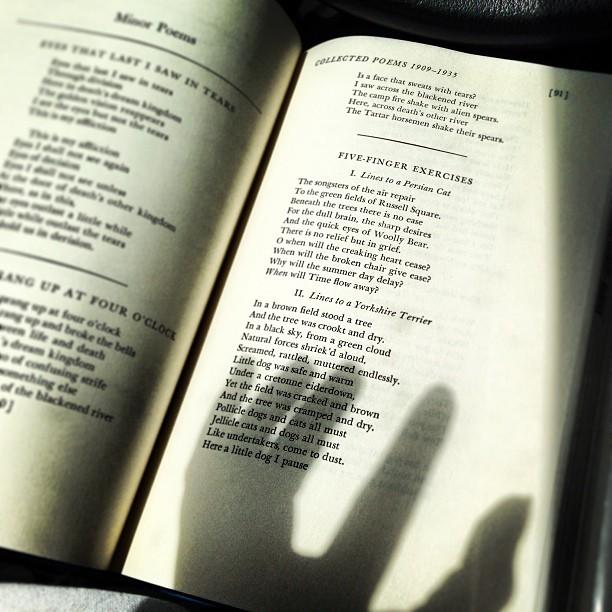The #hand reading…    © 2013 Tajna Tanović. All Rights Reserved.