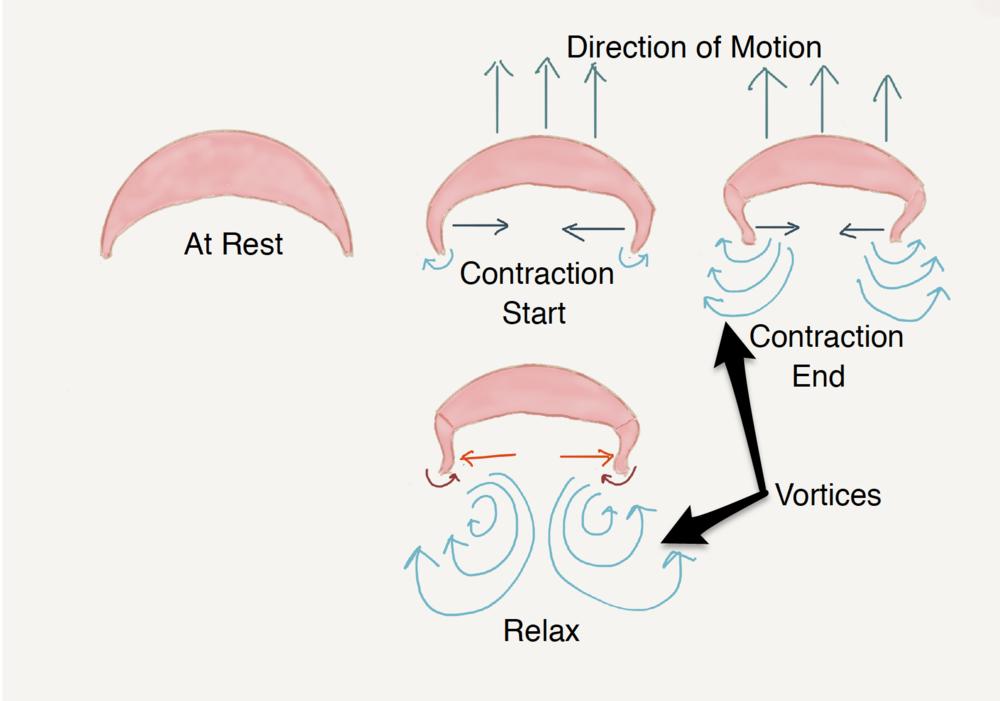 Jellyfish motion