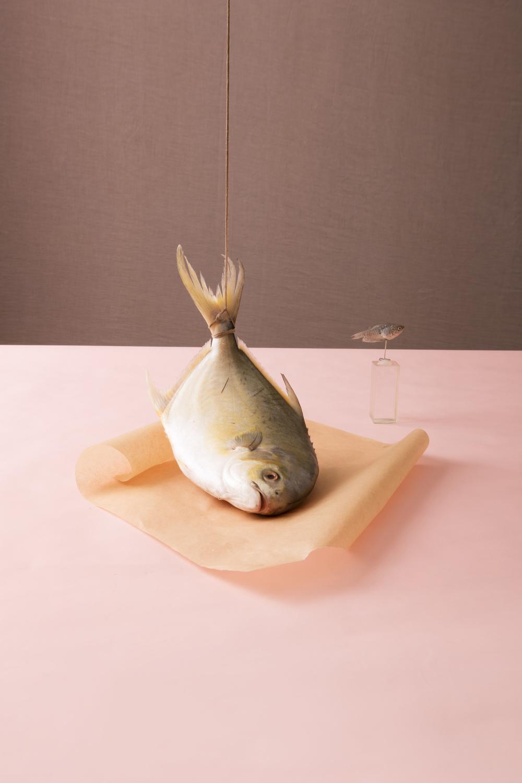 fish_134_Edit2.jpg