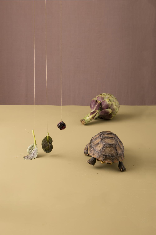 turtle_025_Edit1.jpg