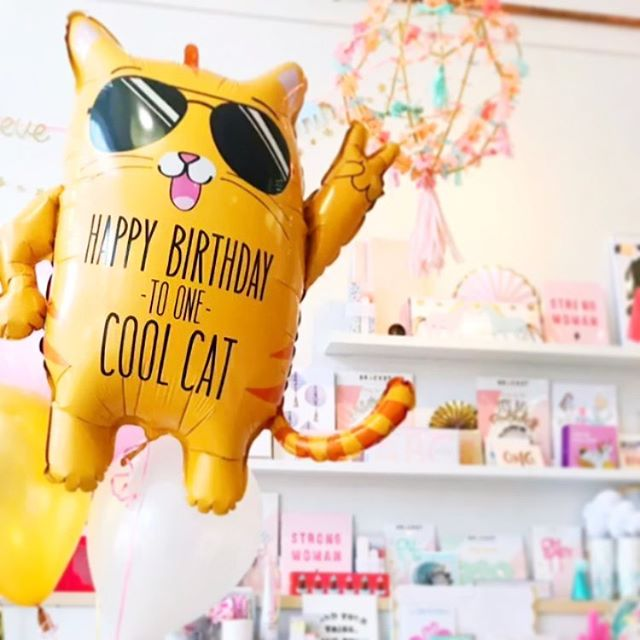 💁🏼‍♂️I find this so amusing, lol💕🌴 #partyintheusa #party #coolcat #smallbusiness