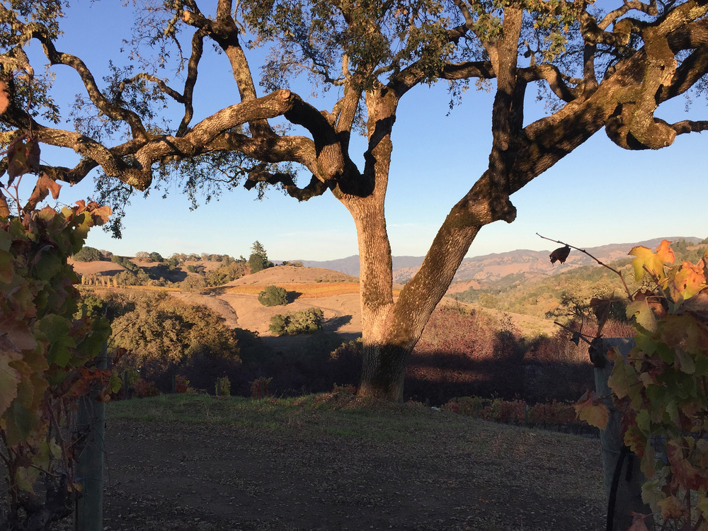 The Oak Tree location overlooks the valley and vineyards