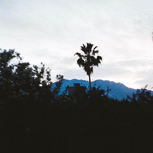 Palm Springs, March #leicam3 #portra400
