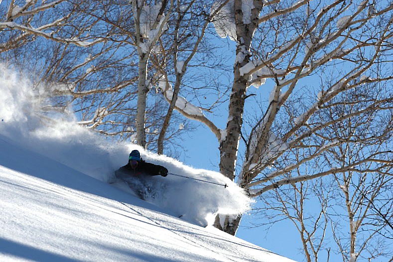 niseko's infamous tree runs