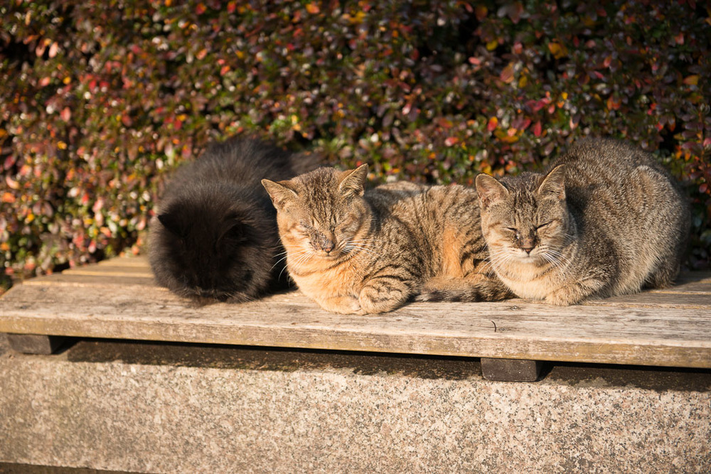 Saw the locals of Hiroshima. Unfortunately these 3 were strays and would come over to you if you sat down with food.